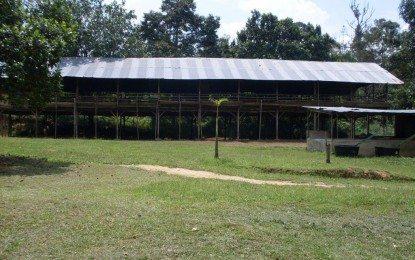 Usaha Ternak Penggemukan Kambing Jawa